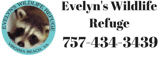Welcome to Evelyn's Wildlife Refuge